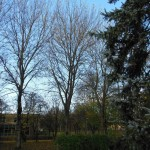 Trees at 18 november